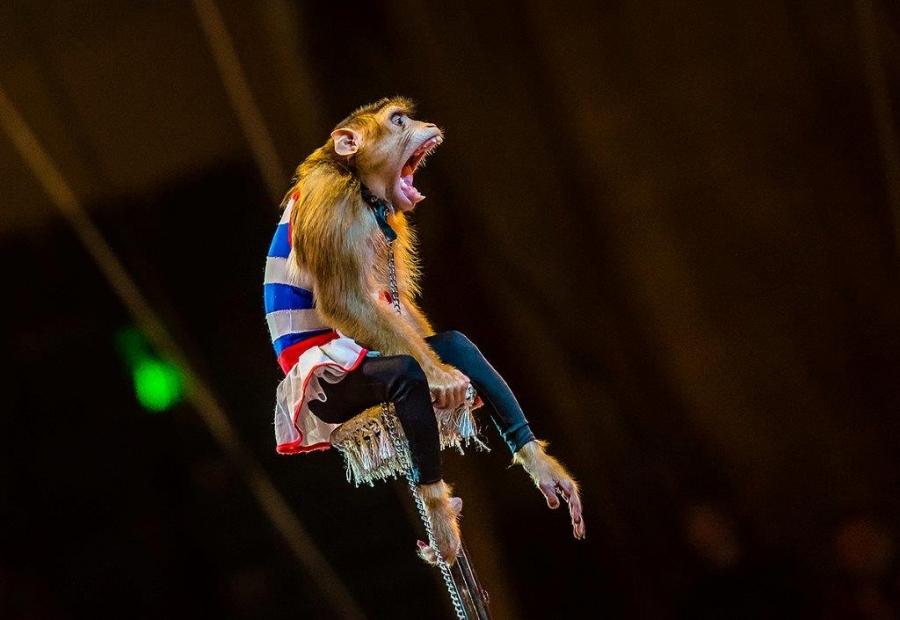 пример прикольные фото цирка каждой